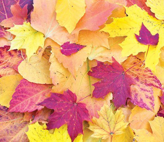 Queer Autumn